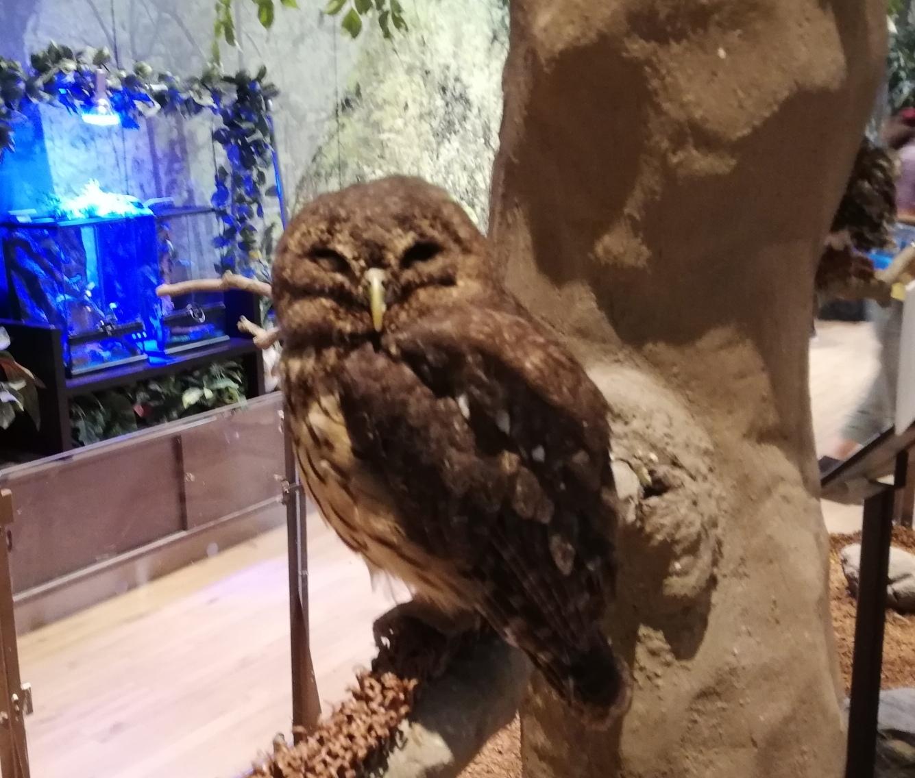 珍しい動物達がたくさん!見てふれあって、楽しみどころいっぱいのオービィ横浜 体験レポ